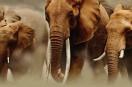 Zimbabwé: La Chine veut protéger la faune !