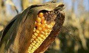 Guinée Bissau: Une compagnie indienne injecte 10 millions $ dans l'agriculture
